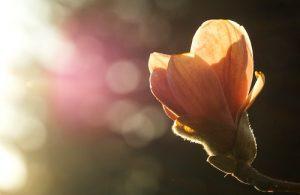 Crescita personale: spesso la vita non ci da quello che vogliamo o addirittura ci mette in difficoltà…