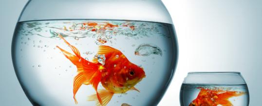 Hai la memoria di un pesce rosso…