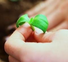 Crescita Personale: come intraprendere un percorso  di miglioramento e crescita personale…