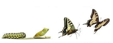 Chi ha paura del cambiamento?